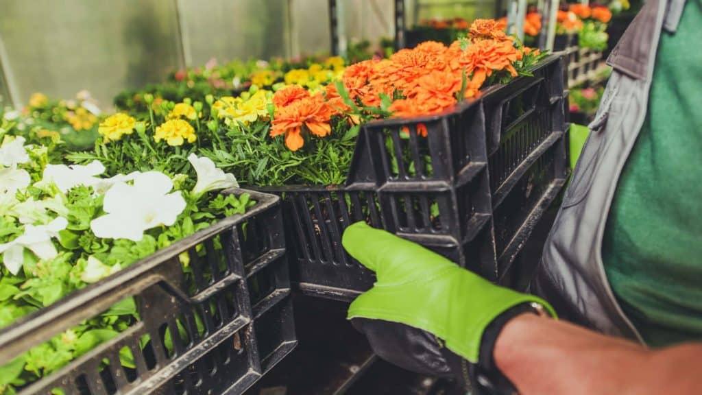 gardening business concept PDKYM9P min